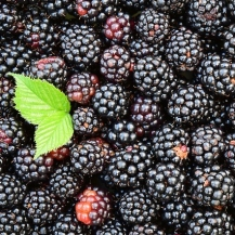 blackberries-1541320_640